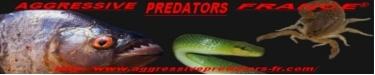 Reptiliomorpha Sans_t15