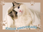 Joyeux anniversaire Chevalier Blanc Mini10