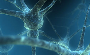 une résistance aux opioïdes contre la douleur. Neuron10