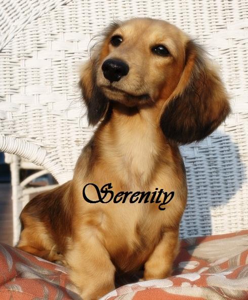 Serenity Seri_714
