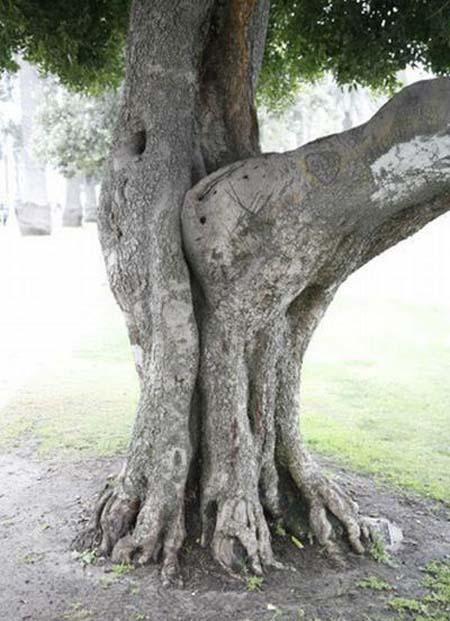 c'est ainsi que les arbres se reproduisent Att00011