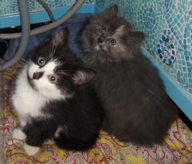Photos de chats petits et que Dsc09712