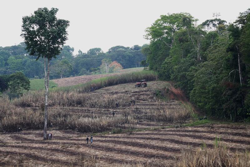 PHOTOGRAPHIE : Récolte de canne à sucre à San Isidro de El General (Costa Rica) Costa_11