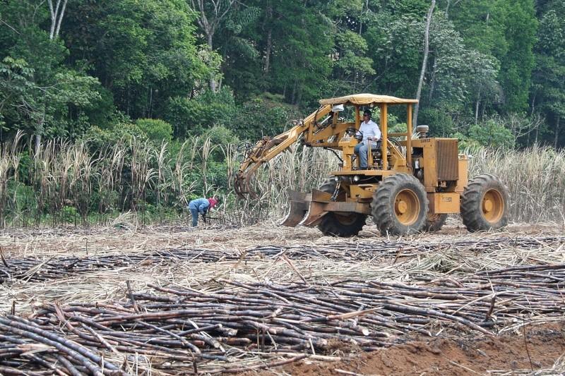 PHOTOGRAPHIE : Récolte de canne à sucre à San Isidro de El General (Costa Rica) Costa_12