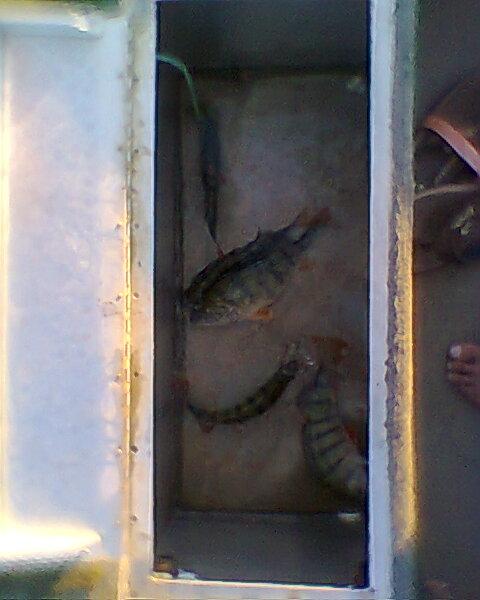 Votre pêche carna de Septembre Photo013