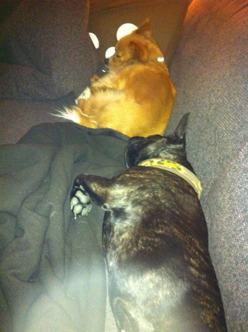 Tito hat nun seinen wohlverdienten Sofaplatz erhalten Img_1210