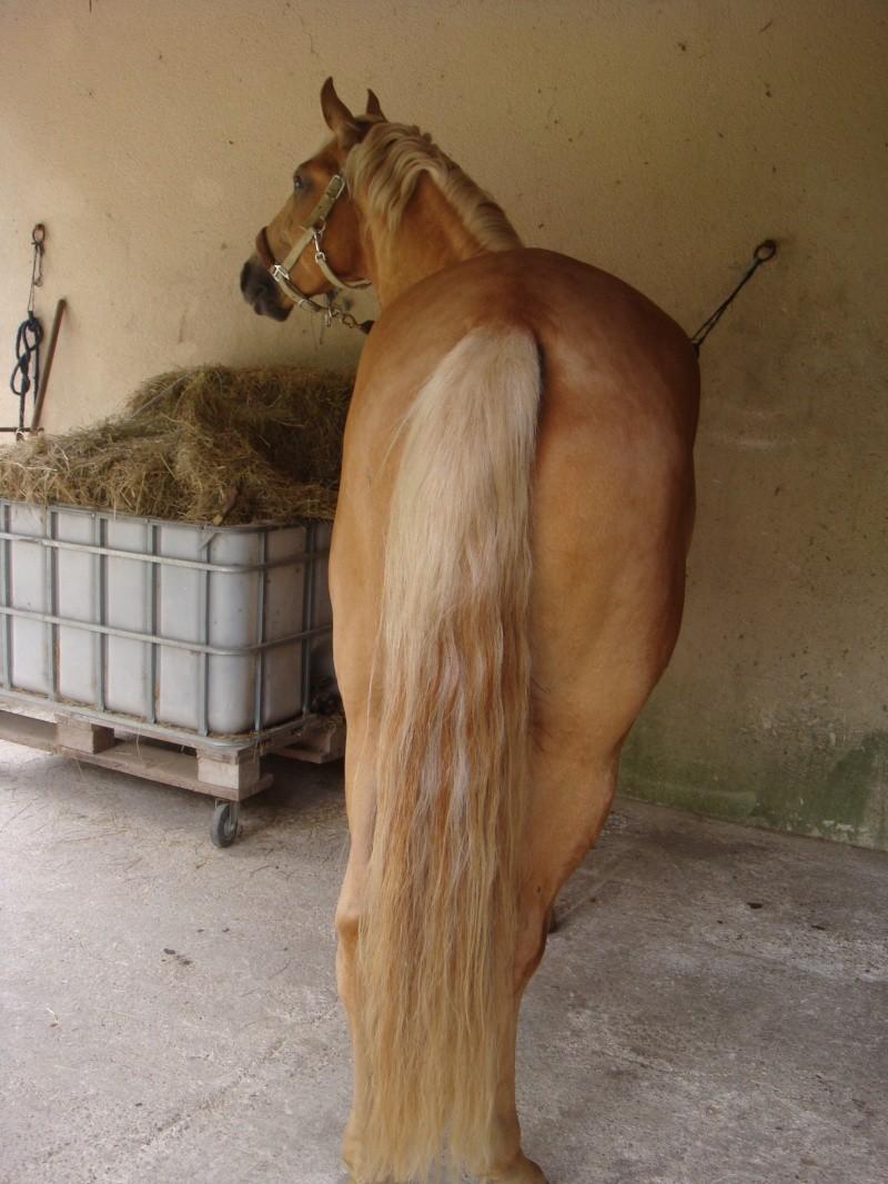 Caramel, un blond et une blonde au travail - Page 8 Dsc03712