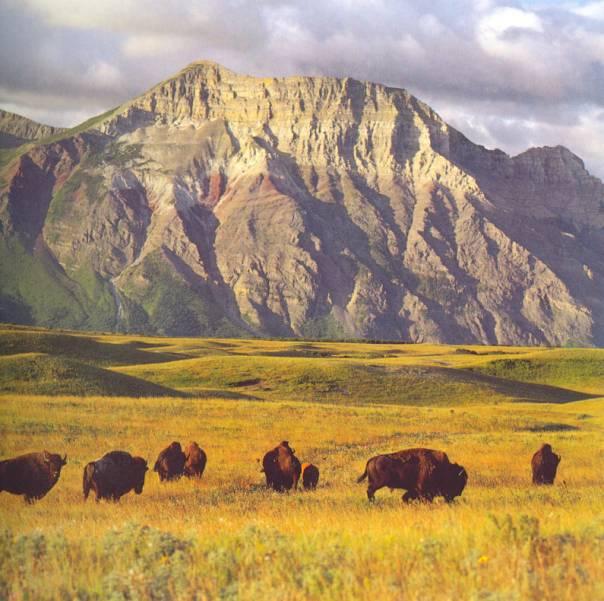 bisons et amerindiens Le_bis10