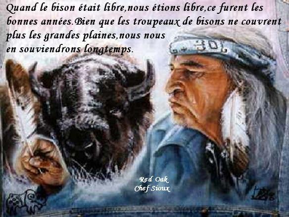 bisons et amerindiens Quan-l10