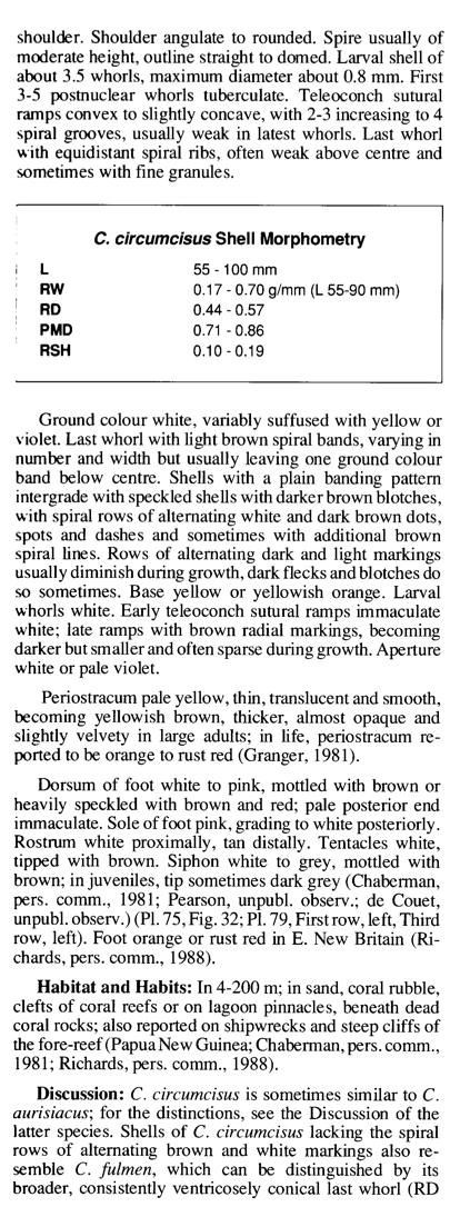 Conus (Pionoconus) fulmen kirai   Kuroda, 1956 Brazie11