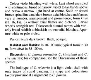Conus (Pionoconus) fulmen kirai   Kuroda, 1956 Fulmen10