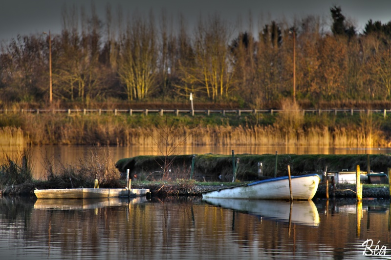 Avesnois : Étang de Le Quesnoy. Etang_10
