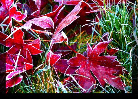 Séries hivernales - topic saisonnier de mes clichés Maxime10