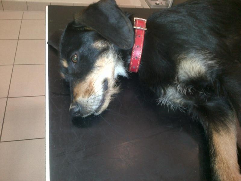 appel aux dons pour un chiot X  griffon de 5 mois accidenté (femur cassé)[somme réunie merci a tous] Photo_34