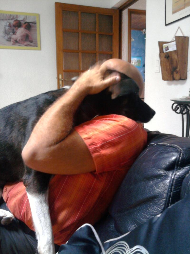 SHEITAN  berger malinois X husky de 2 ans et demi Photo-10