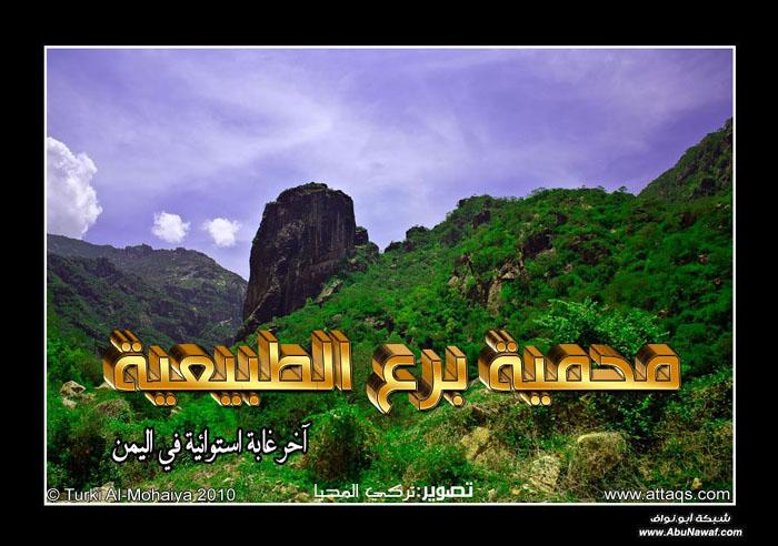 منتدى ابناء برع اليمن
