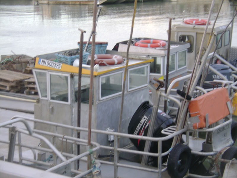 Barge , Chaland , Plate , Ponton et Lasse ostréicole. Dsc06767