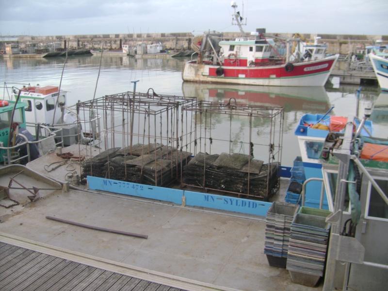 Barge , Chaland , Plate , Ponton et Lasse ostréicole. Dsc06850