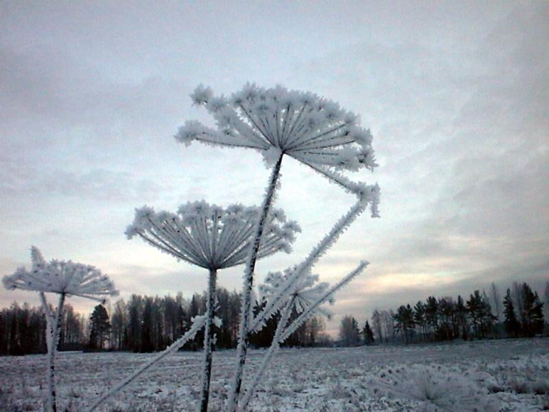 Finlandia, Finlandia, Finlandia! 015_fr10