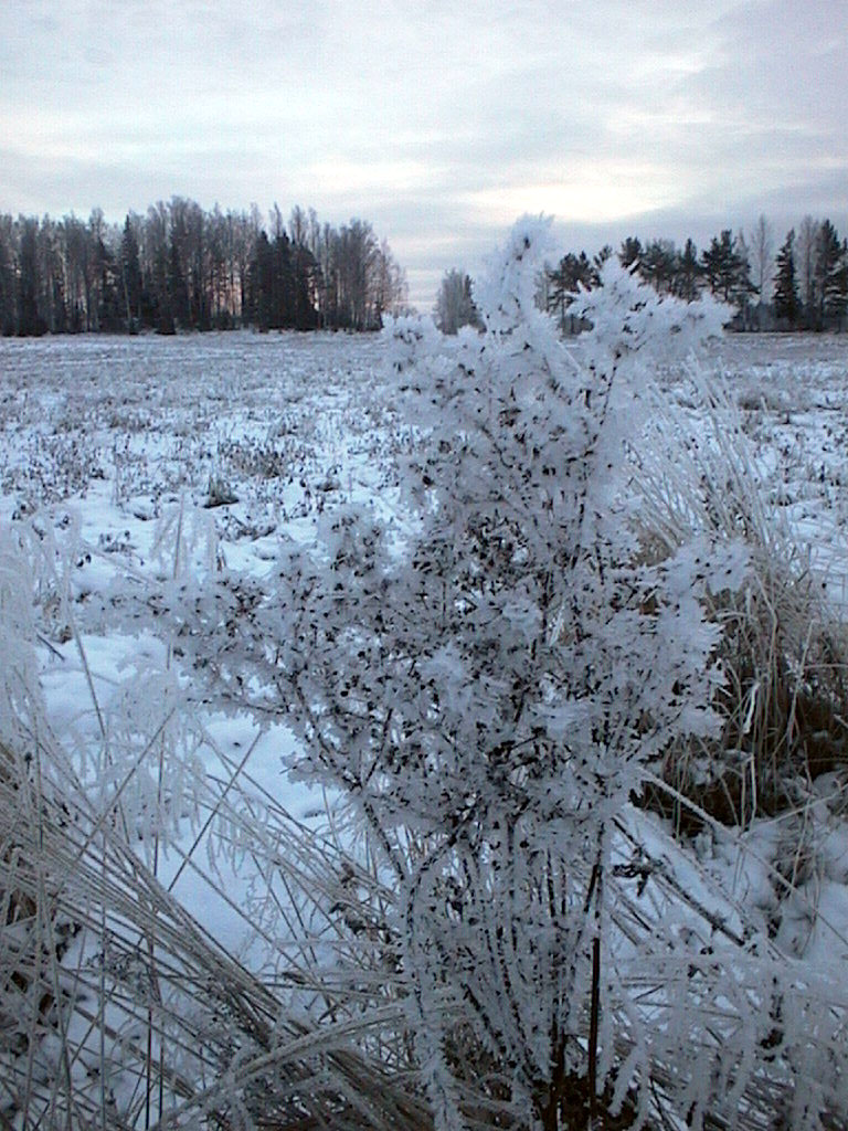 Finlandia, Finlandia, Finlandia! 016_fr10