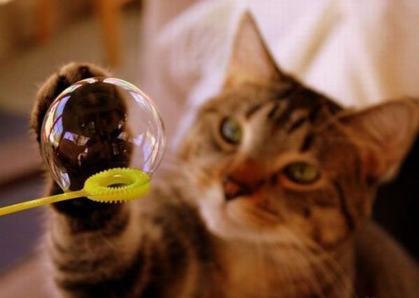 Gattilicious  =^.^= - Pagina 2 Bubble10