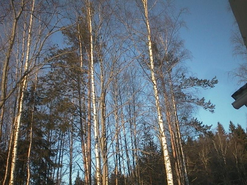 Finlandia, Finlandia, Finlandia! - Pagina 2 Finxma13