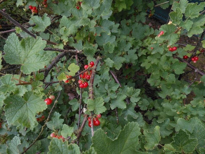 La récolte des fruits 01110