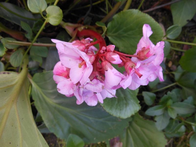floraisons d'octobre - Page 9 01312