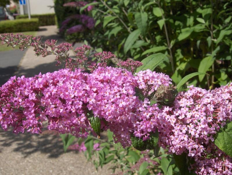 floraisons des arbres et des arbustes - Page 4 Hpim3325