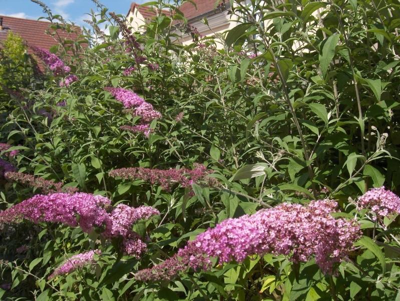 floraisons des arbres et des arbustes - Page 4 Hpim3326