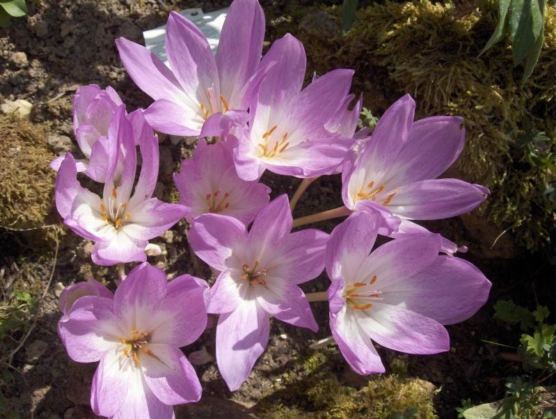 Floraisons du mois de septembre Hpim3619