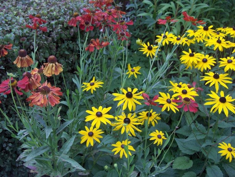 Les fleurs de mon jardin Hpim3623
