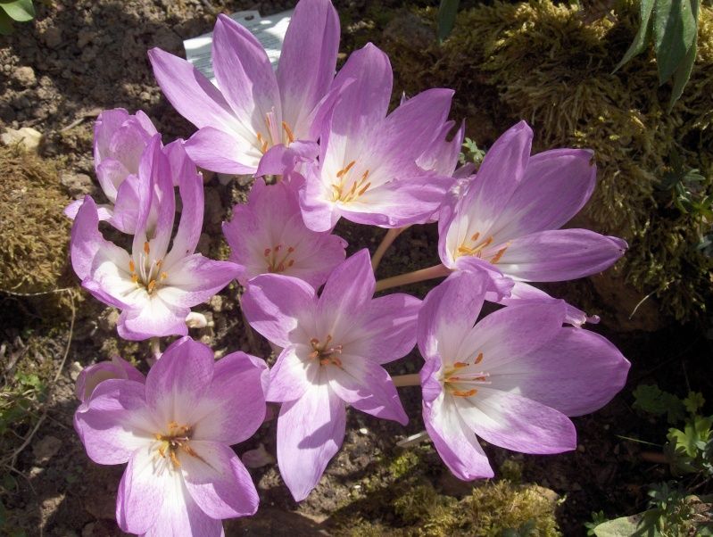 Les fleurs de mon jardin Hpim3624