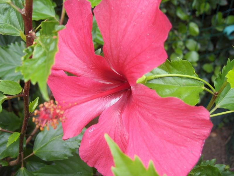 Floraisons du mois de septembre - Page 2 Hpim3722