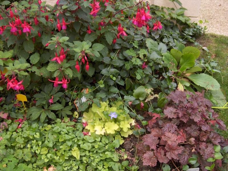 Floraisons du mois de septembre - Page 2 Hpim3726