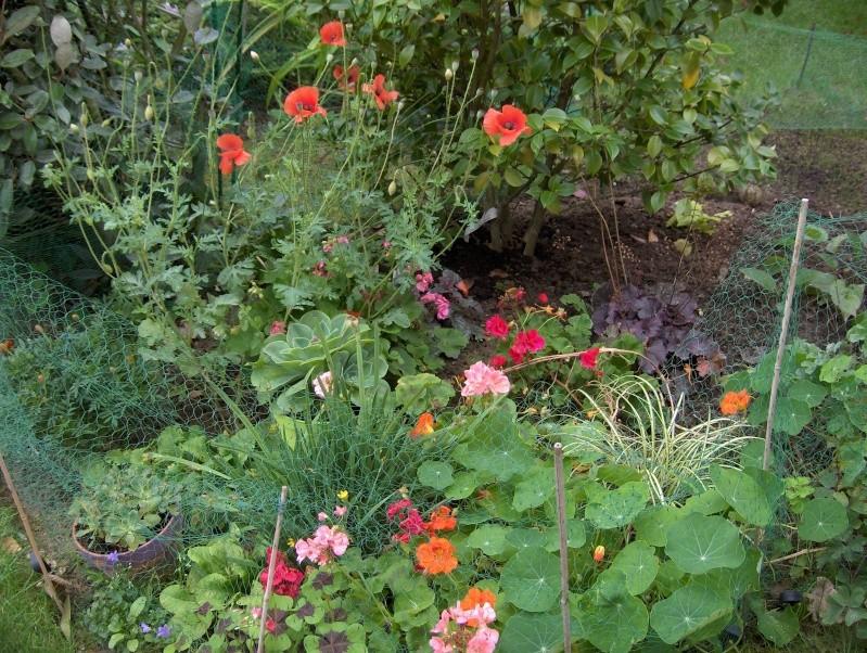 Floraisons du mois de septembre - Page 2 Hpim3728