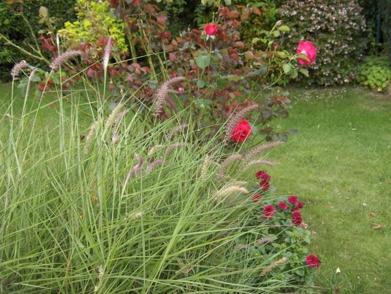 Les fleurs de mon jardin Hpim3731