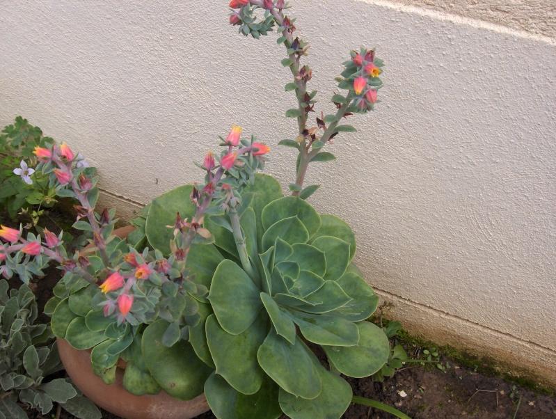 Les fleurs de mon jardin Hpim3732