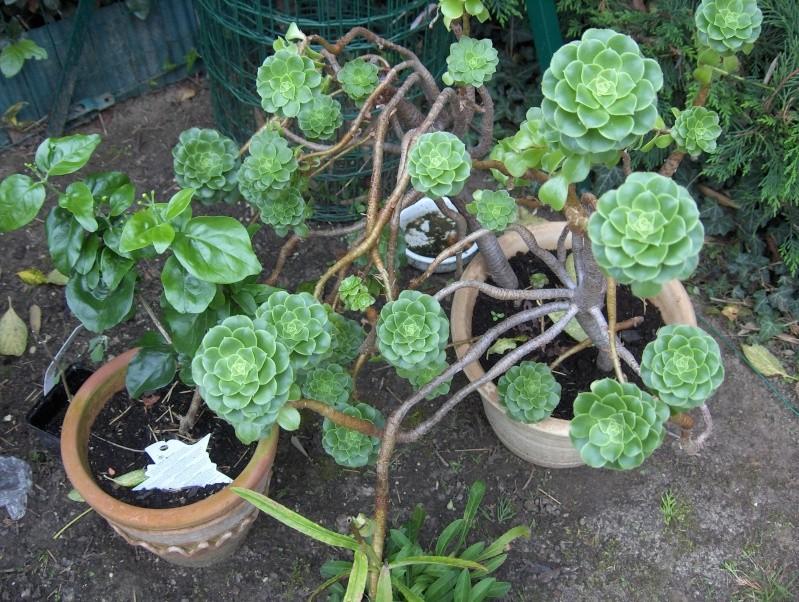 Les fleurs de mon jardin Hpim3733