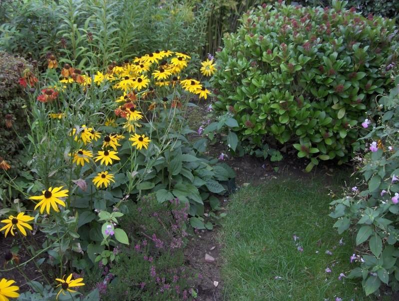 Les fleurs de mon jardin Hpim3736