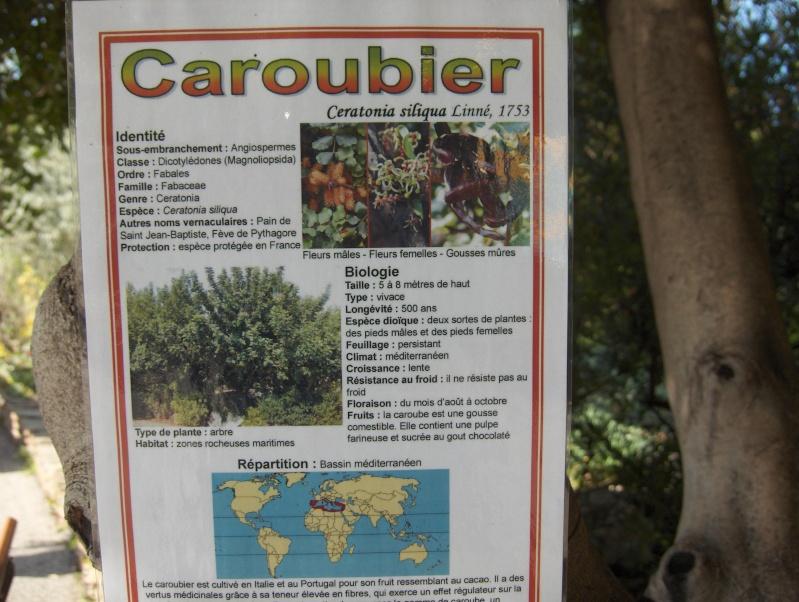 Le Caroubier Hpim3835