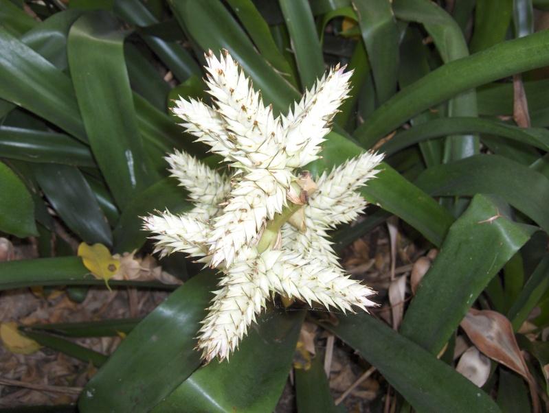 Quelques plantes exotiques Hpim3919