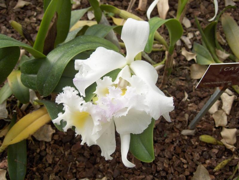 Quelques plantes exotiques Hpim3920