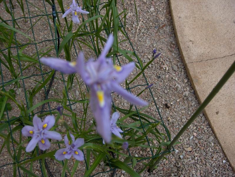 Quelques plantes exotiques Hpim3923