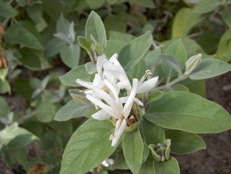 Quelques plantes exotiques Hpim3924