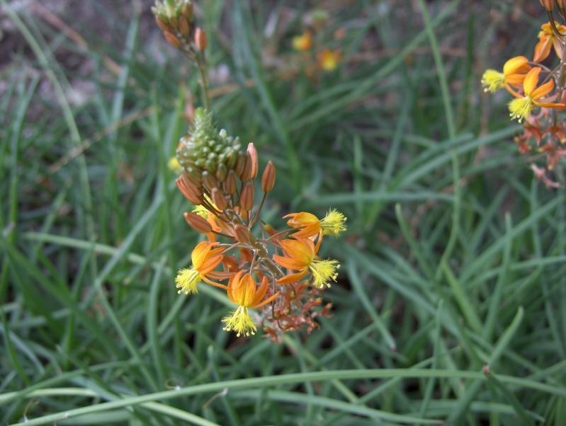 Quelques plantes exotiques Hpim3926