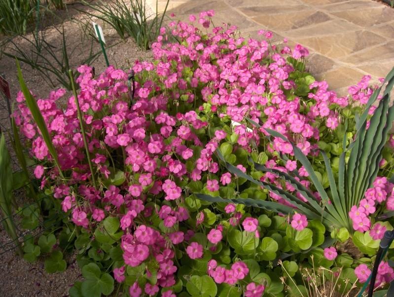 Quelques plantes exotiques Hpim3931