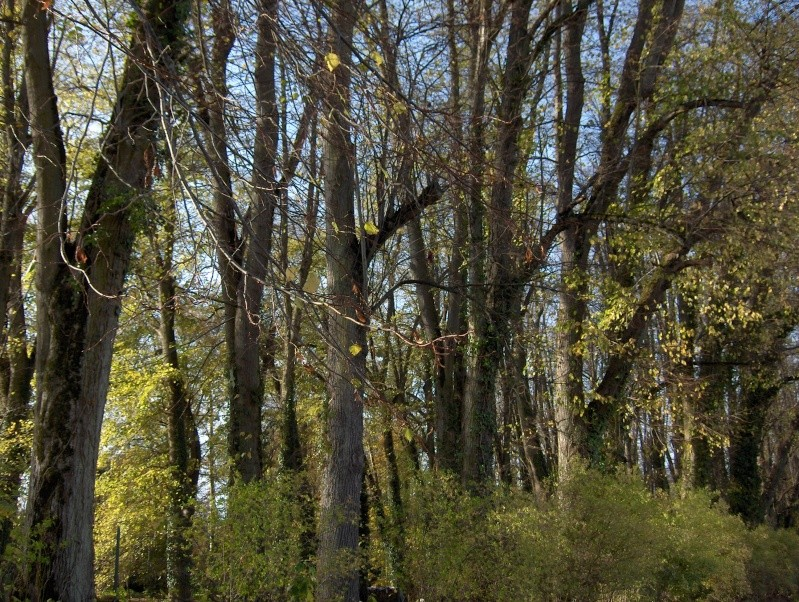 Balade en forêt Hpim3944