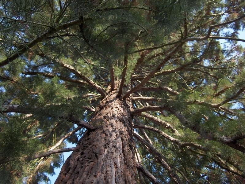 Balade en forêt Hpim3945