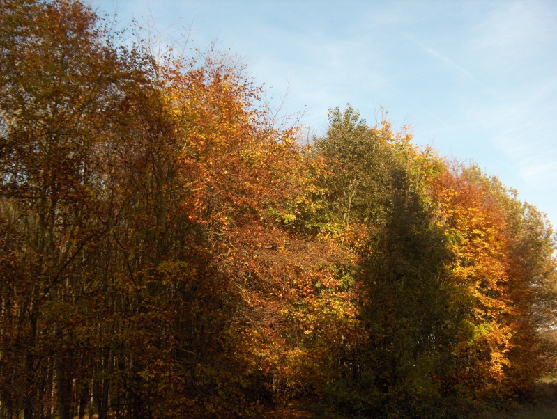 Balade en forêt Hpim3949